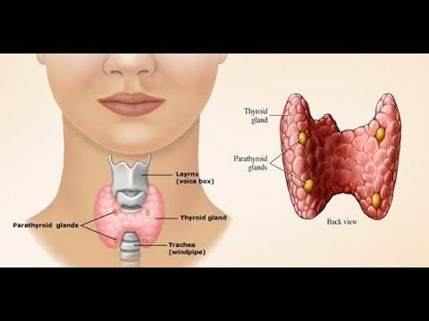 A emorroidi i danni di stomaco