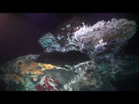 Incredible Undersea Natural Mirror and Microbes