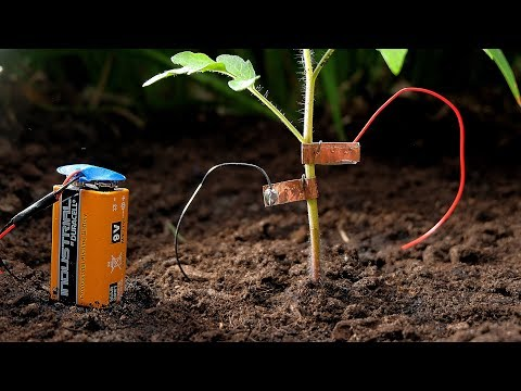 Protect Your Tomatoes From Snails with Electricity