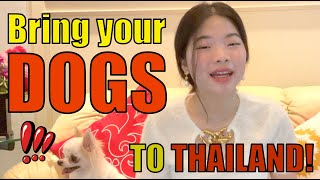 How to bring your DOG to Thailand   Baan Smile 2021
