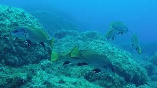 Immersioni 21 Ottobre - Video