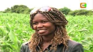 The Millionaire Farmer