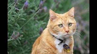 Смешные коты и котики, приколы про котов до слез  ! Кошки до слез!