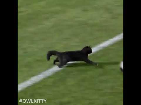 Musta kissa tekee maalin