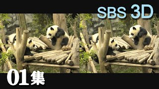 Panda space 30min episode01 熊猫空间01集
