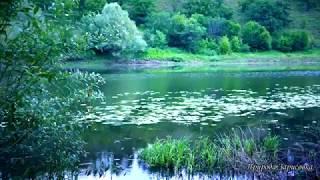 КРАСИВОЕ ВИДЕО...!! Утро, звуки природы, река, старое русло, пение птиц, релакс, природа, медитация