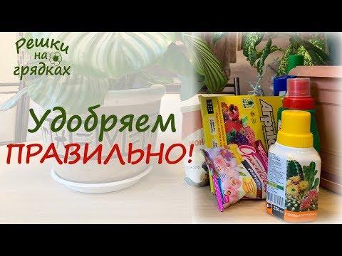 Удобрение комнатных цветов | Мой опыт и важные советы!