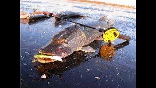 Первый лед 2018.  Рыбалка по первому льду