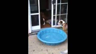 Dog drags his pool indoors