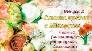 Семена с алиэкспресс выпуск 2 Aliexpress