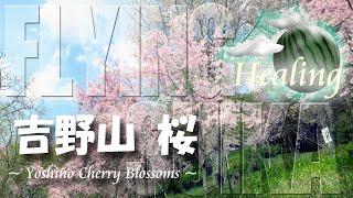 【ヒーリング ドローン 3時間半 4K】吉野山 桜 2017 Healing Drone Aerial Cherry Blossoms in Yoshino
