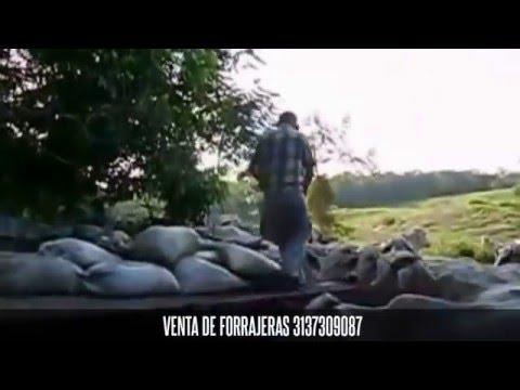 PROTEINA PARA EL VERANO EN BOVINOS