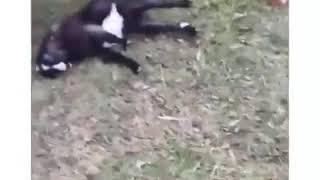 Смешные коты и собаки ржака😁😂😂😂
