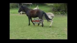 Ane et cheval