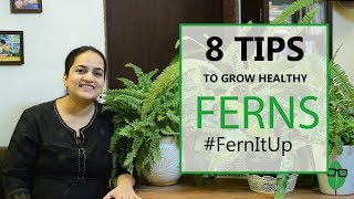 8 Tips for Growing Healthy Ferns | Indoor plants | Fern care | Gardening Tips