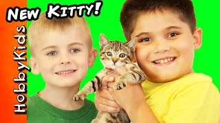We Got A NEW Kitty Cat! Toy Surprise Egg + Play. Cat Rescue Family Fun HobbyKidsTV
