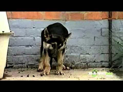 Video Rabies Symptoms