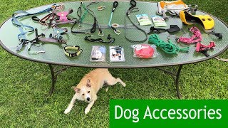 Dog Accessories:  Training W/ Such Good Dogs.