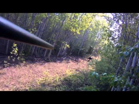 Canada Black Bear Hunting in Northern Alberta with Wide North Outfitters