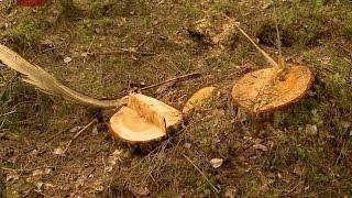 Контроль за лесопромышленниками в регионе будет усилен