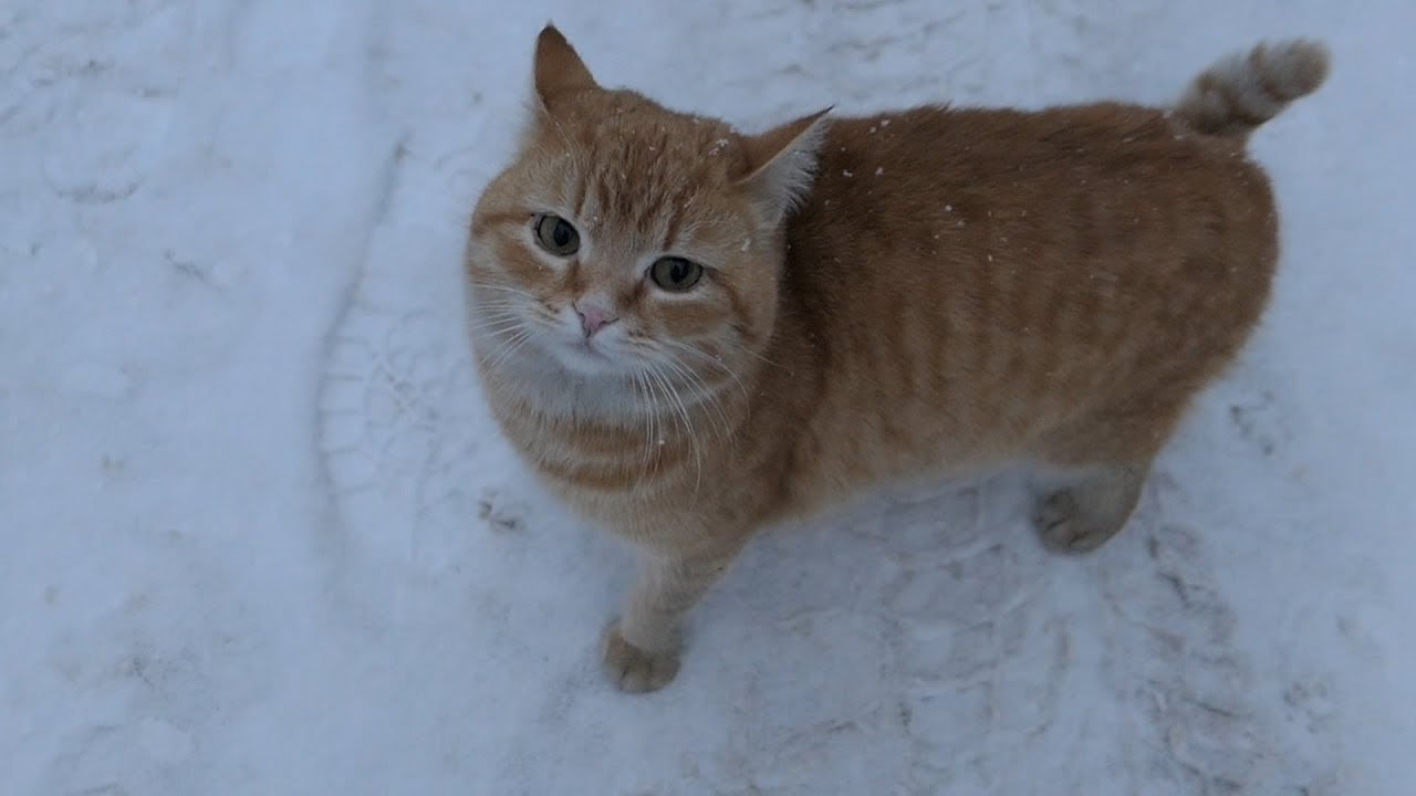 5 cats on the street on a snowy day