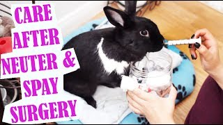 How To Care For Your Bunny After Spay/Neuter Surgery!