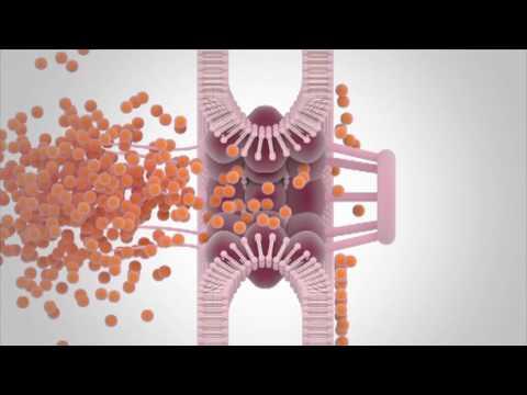 Magnetresonanz Behandlung von Prostatitis