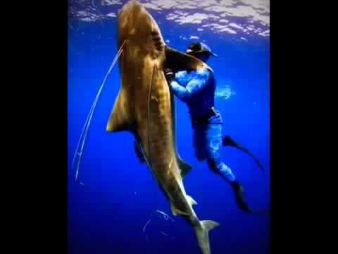 большие акулы HG