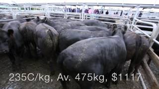 Mount Gambier Prime Market Review - 4th March 2015