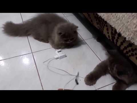 Video Tips Cara Mengatasi Stress Pada Kucing