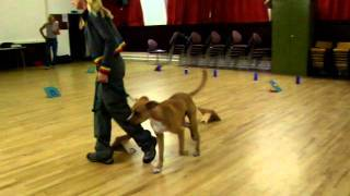 A Video Clip from Puppy Training Classes
