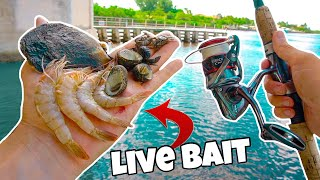 FIND YOUR OWN BAIT FISHING CHALLENGE!! (CRAZY CATCH)