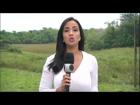 Nuvem densa de fumaça cobre várias cidades do Pará