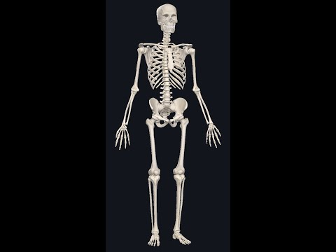 Artroza articulației șoldului cum se determină