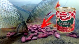 Реакция рыбы на КРАСНУЮ ФАСОЛЬ Подводная съемка