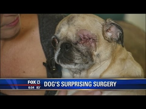 Vets Remove Dog's Eye Without Owner's Consent