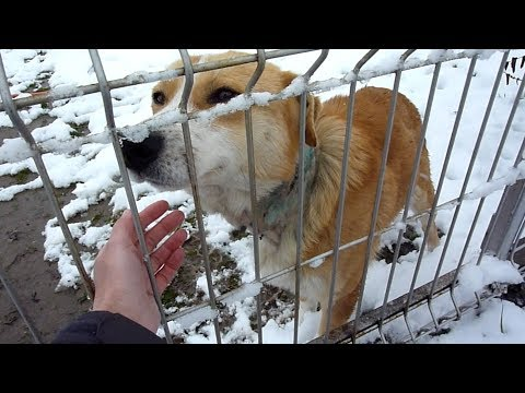 Rescue Of Scared Injured Homeless Dog With Embedded Collar On A Very Cold Day