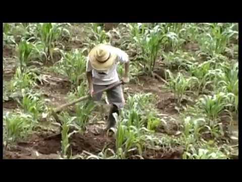 El sueño del Inmigrante, película Guatemalteca