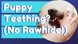 Puppy Teething and Chewing Solutions 🐶