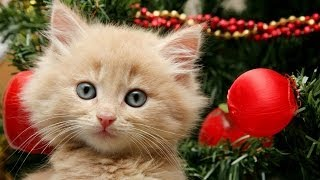Getting a Kitten for Christmas Compilation (2013)