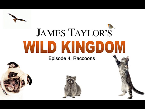 James Taylor's Wild Kingdom (Episode 4: Raccoons)