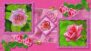 Ах,эти розовые розы!