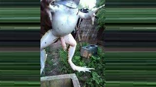 Mutant animals: amazing mutant animals you won't believe are real - TomoNews