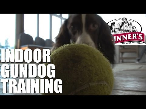 Gundog training tips – Easy indoor training