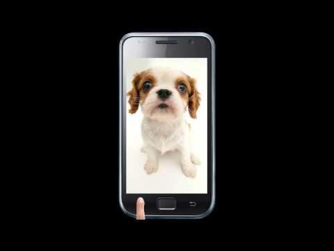 Video of Dog sniffs screen wallpaper