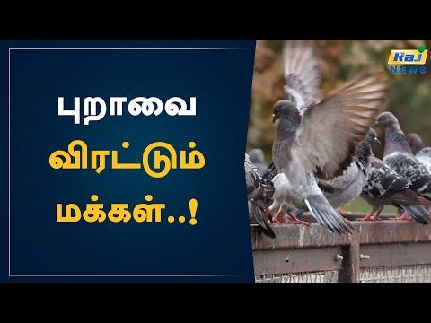 , title : 'புறாவை விரட்டும் மக்கள்..! | Pigeons