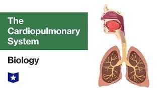 The Cardiopulmonary System | Biology