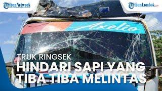 Truk di Sumbawa Ringsek karena Hindari Sapi yang Tiba-tiba Melintas di Jalan