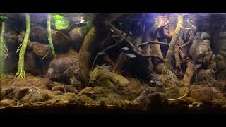 Strumień wpływający do jeziora Valencja (SA) - biotopowe