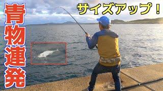 #4 生きた魚を泳がせたらさらにデカい青物がきた!!